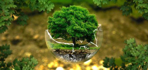 ökologisches Investment